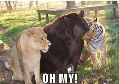 """Lions and tigers and bears """"oh my!"""""""