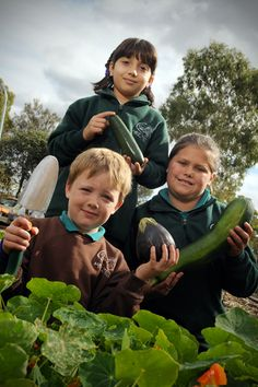 Ararat Sustainable Communities fund  #wind #energy #vegetables Sustainability, Community, Vegetables, Veggies, Vegetable Recipes, Sustainable Development, Communion