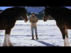 Budweiser Clydesdales Horse Super Bowl Commercial 2013 - YouTube
