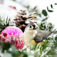 Christmas Bird Titmouse Square Art Print by Christina Rollo. All prints are professionally printed, packaged, and shipped within 3 - 4 business days. Choose from multiple sizes and hundreds of frame and mat options. Stretched Canvas Prints, Canvas Art Prints, Canvas Wall Art, Square Canvas, Square Art, Christmas Bird, Christmas Ornament, Christmas Crafts, Thing 1