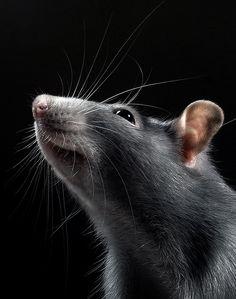 A portrait of a beauty | Animals photos