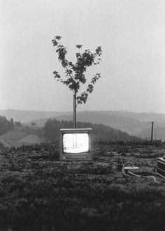 Ernst Caramelle, Video-Landschaft (Video-Baum), 1974