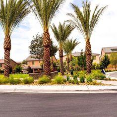 Who doesn't love #palmtrees? #summer #lasvegas #vegas #desert