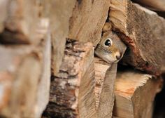 I can see you ... can you see me?  :)