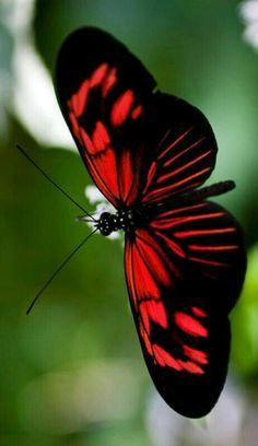 Red & Black unbelievable.
