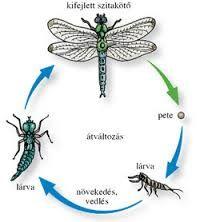 rovarok fejlődése teljes átalakulás képek - Google keresés Montessori, Homeschooling, Teaching, Google Search, Nature, World Discovery, Animaux, Animales, Naturaleza