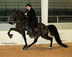 Bama State horse:  Racking horse (how beautiful is that...) <3