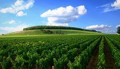 Weinberg Cote de Nuits - France - Vineyards in Côte de Nuits, Burgundy | Photo:Stephan