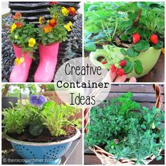 Upcycle everyday items into creative planters as gifts. Cute boots for kids filled with edible flowers or their favourite vegie; colander with ready made drainage holes; herb baskets or a cup/saucer planter filled with berries. Follow the tutorial @ http://themicrogardener.com/6-easy-diy-container-garden-projects/ | The Micro Gardener
