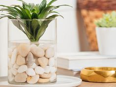 Take your green thumb indoors by creating an indoor water garden using aquatic plants and decorative stones. Enliven your spirits with this simple DIY idea! Water Garden Plants, Indoor Water Garden, Indoor Plants, Water Gardens, Glass Garden, Herb Garden, Terrarium Diy, Indoor Water Features, Garden Shelves