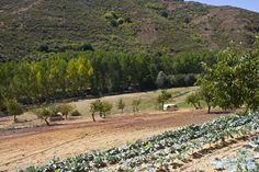 Visita do Blog Flavors and Senses à nossa Quinta do Bísaro em Gimonde. Porco bísaro criado em campo.