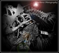 Dinosaur skull in the Perot Museum. Photo by FireHorse Photography