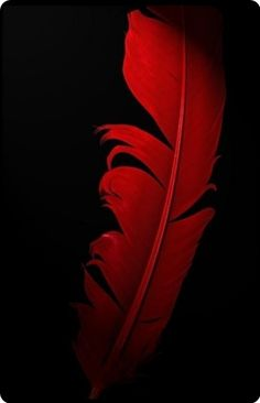 Deep red - cool photography