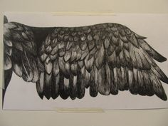 a pen drawing of a birds wing