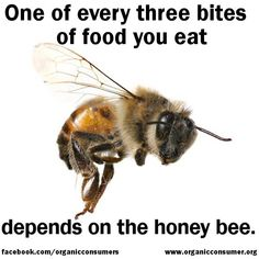 Bees pollinate at least 130 different crops in the US alone, including fruits, vegetables and tree nuts.