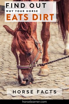 Why Your Horse is Licking and Eating Dirt Interesting Facts About Horses, Homemade Horse Treats, Horse Behavior, Horse Care Tips, Horse Facts, Animal Magic, Majestic Animals, Horse Riding, Pay Attention