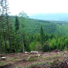 Hovfjället Trail Run   Terränglöpning genom vargrevir