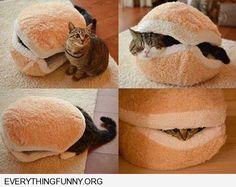 funny cat hamburger bed