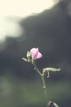 Free stock photo of nature, petals, flower, macro Free Photos, Free Stock Photos, Bloom Blossom, Flower Photos, Amazing Flowers, Nature Photos, New Image, Planting Flowers, Plants