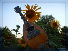 Roundback Mandolin (Mandola) with the   Giant Sunflowers!