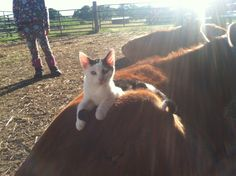 How to raise barn cats