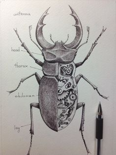 mechanical insect sketch - Google Search