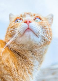 Raise one's eyes by Kathrin Köhler on 500px