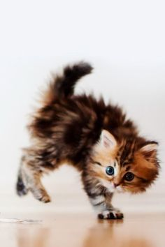 Man, I just did not think that eating Whiskas Kitten would give me enough wind to acheive liftoff....