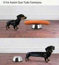 Funny Cartoons And Memes Dachshund Funny, Dachshund Puppies, Dachshund Love, Funny Dogs, Daschund, Fun Funny, Dachshunds, Cute Funny Animals, Funny Animal Pictures