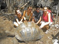Volunteer and Internship programs in Zanzibar will introduce you to the wonders of the spices but also to the beautiful nature of the Island. Giant Tortoise, Tanzania, How To Introduce Yourself, Prison, Islands, Turtle, Campaign, Meet, Content