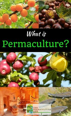 Permaculture is an ethical design science that uses traditional people's agricultural practices, perennial tree crops, and other sustainable methods. Permaculture Principles, Permaculture Design, Gardening For Beginners, Gardening Tips, Gardening Supplies, Agricultural Practices, Agricultural Science, Forest Garden, Garden Paths