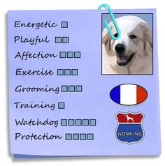 Great Pyrenees. So true. The watchdog thing is definitely true. They will scare off any intruder!