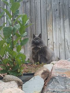 My 15 year old cat is rediscovering the outdoors