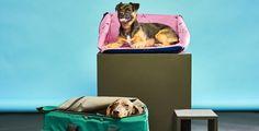 Viaje Dog Friends, Dogs, Travel, Voyage, Viajes, Pet Dogs, Doggies, Destinations, Traveling