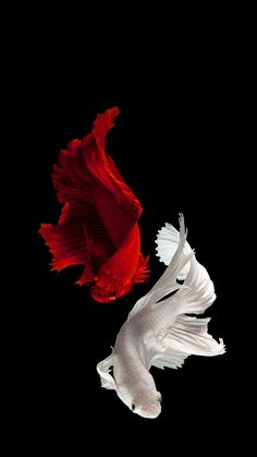 Ocean Wallpaper, Live Wallpaper Iphone, Apple Wallpaper, Live Wallpapers, Nature Wallpaper, Wallpaper Backgrounds, Fish Tank Themes, Hyper Realistic Paintings, Betta Fish Tank