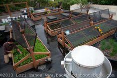 Bastille Cafe in Ballard, WA installs a rooftop deck over their restaurant that provides 50-100% of their greens during summer months | #gardening #sustainable