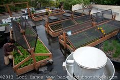 Bastille Cafe in Ballard, WA installs a rooftop deck over their restaurant that provides 50-100% of their greens during summer months | #gardening #sustainable