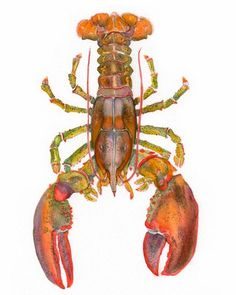 ART, You are my Lobster,  Lobster watercolor, print from original painting, kitchen art, food painting, from the sea