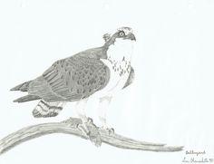 23 meilleures images du tableau Mes dessins d oiseaux   Birds, My ... d03d02ae02c