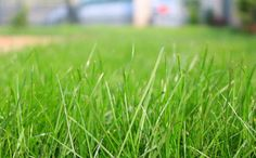 How to Prepare Soil for Growing Grass Seed | Learn the basics of soil preparation before trying to grow new grass.