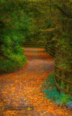 Autumn Lane ~ Inistioge, Co.Kilkenny, Ireland
