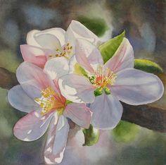 Apple Blossom In Sunlight Painting  - Apple Blossom In Sunlight Fine Art Print