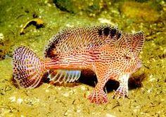 Resultado de imagem para fotos de peixes no fundo do mar