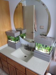 Scifisarah's planted nano tanks.....I'd love those in my bathroom!