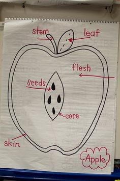 could do a blank one where kids write/ cut out the parts of the apple to label them at the end of an apple unit