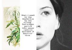 catching fire - Katniss Everdeen - the Hunger Games