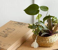 FREE Bloom & Wild Plants | Gratisfaction UK Free Samples Uk, Freebies Uk, Free Competitions, Bloom And Wild, Uk Deals, Free Plants, Flowers, Florals, Flower