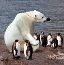 Resultado de imagen de osos polares