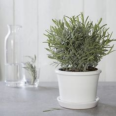 Roma Small Planter With Saucer | Vases | Home Accessories | Home | The White Company UK