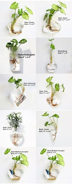 Beautiful and great for rooting plants in water! Green plants and sands are not included. It comes with the hook to hang it one the wall. Water Plants Indoor, Plants Grown In Water, Mini Plants, Cool Plants, Green Plants, Glass Planter, Wall Planters, Wall Terrarium, Decoration Plante
